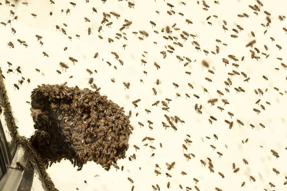 Bienenschwarm - © FF Krems
